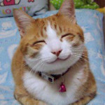 So_happy_smiling_cat